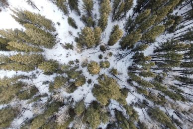 forestry drone services
